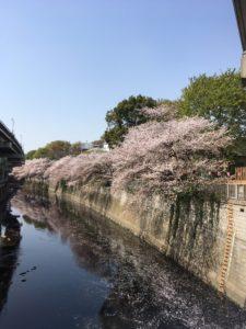 江戸川橋桜Ⅰ