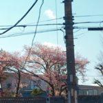 春が近づいてきました!!